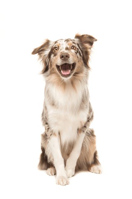 Šunų DNR testai